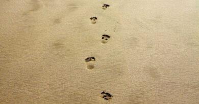 ビーチの上に残る足跡
