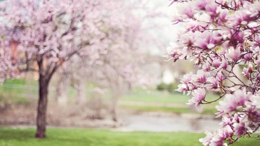 満開な木の花